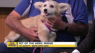 Pet of the week: Minnie is a super sweet 2-year-old Corgi mix who needs a forever home - Video