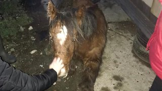 Abandoned Pony Rescued From Street After Being Left To Die
