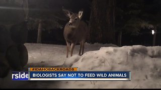 Feeding deer causes harm