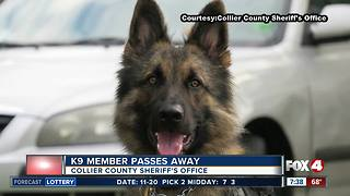 Collier County Sheriff's K9 passes away - Video