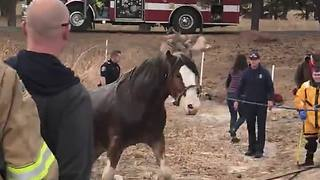 Deputies Save Horse Stuck In Pond After Falling Through The Ice
