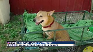 Frenchtown Township animal rescue in danger of being shut down. - Video