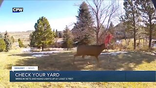 Check your yard for tangle hazards