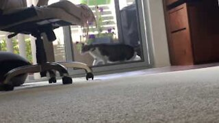 Cat destroys screen door entering house