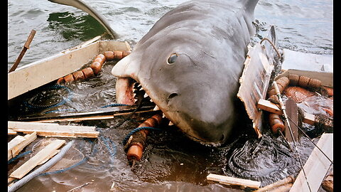 The Matawan Man-Eater | The Inspiration for the Film Jaws