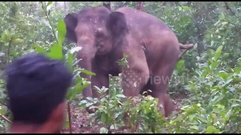 Young elephant gets into fight with men who 'throw sticks and stones' at her herd