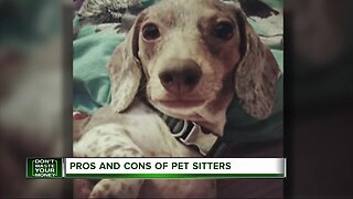 Pros and cons of pet sitters
