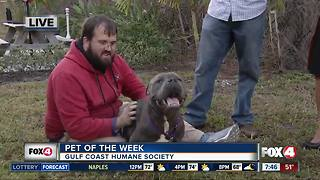 Gulf Coast Humane Society 'Yappy Hour