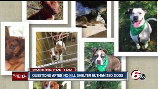 Dogs secretly euthanized in Richmond; animal shelter workers angry - Video