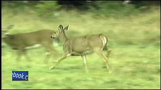 Assembly set to relax deer baiting-feeding ban - Video