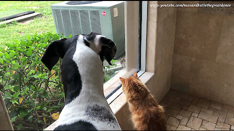 Squirrel teases dog and cat from behind glass