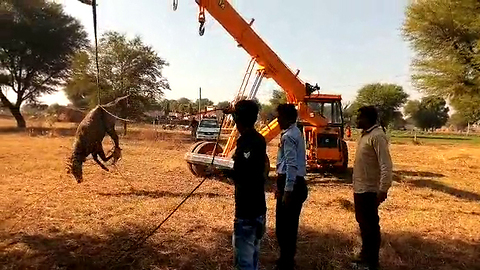 Asian antelope is dramatically winched to safety, six hours after falling into 70ft-deep well in India