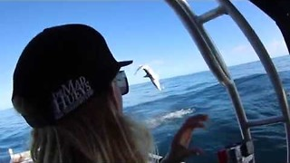 Shark Snags Fisherman's Line With Backflip - Video