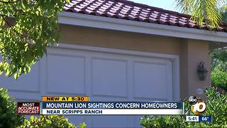 Homeowners worry about mountain lion sightings - Video