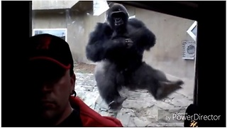 Incredible proof that even gorillas hate selfies - Video