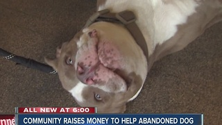 Community raises money to help abandoned dog, Jay - Video
