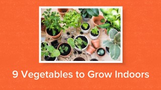 9 vegetables to grow indoors - Video