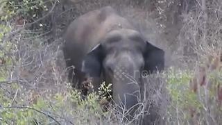 Drone wins face-off with elephant in Indian forest - Video