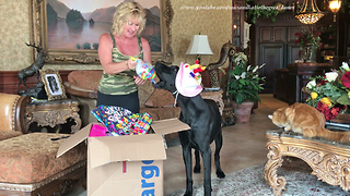 You Tube Friend's Amazing Gifts to Two Year Old Great Dane
