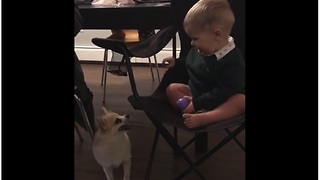 Baby and doggy battle it out for toy dominance - Video