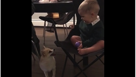 Baby and doggy battle it out for toy dominance