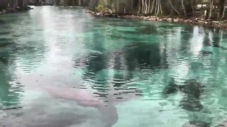 City floats no-touch policy to protect manatees | Digital Short - Video