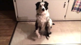 Clever pup plays Simon Says like a pro!