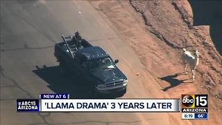 Three year anniversary of 'llama drama'