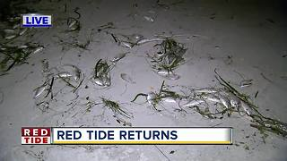 Dead fish wash up on Pinellas beaches