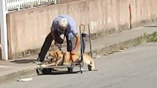 Loyal Owner Walks His Dog Suffering From Bone Cancer - Video