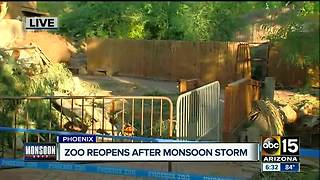 Phoenix Zoo will reopen Saturday after monsoon storms - Video