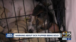 Valley rescue warns about backyard breeders selling sick puppies