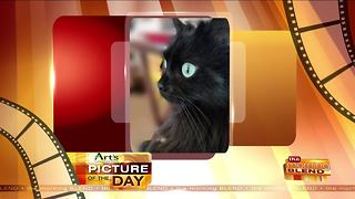 Art's Cameras Plus Picture of the Day for January 25! - Video