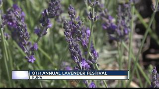 Kuna Lavender Festival runs through Sunday - Video