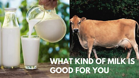 What Kind of Milk is Good for You