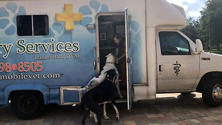 Great Danes actually love going to the vet - Video