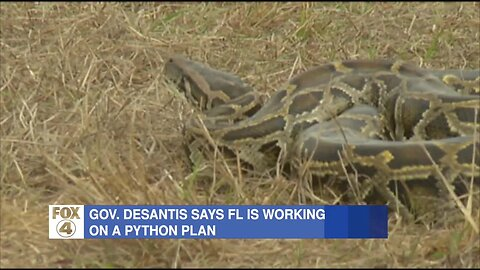 DeSantis: State agencies plan to remove pythons from Everglades