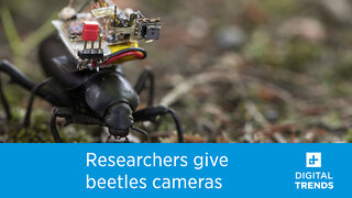 Researchers turned beetles into photographers for the sake of science