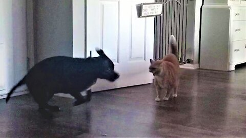 Rescued dog will never give up trying to befriend grumpy cats