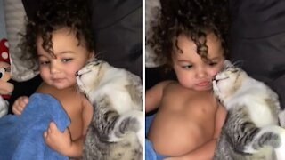 Cat preciously cuddles with toddler for bedtime