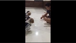 Five Obedient Dogs Wait Patiently To Eat