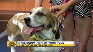 Rescues in Action July 28, 2018 |  Buddy seeks forever home - Video