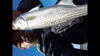 Catching stripers while salmon fishing.