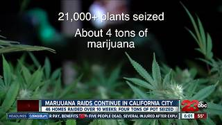 Cal City Police continue marijuana crackdown - Video