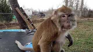 Monkey Opens all of his Birthday Presents - Video