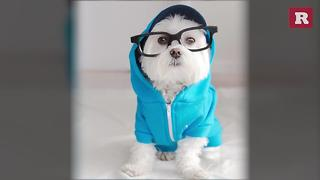 Stylish Pup | Rare Animals - Video