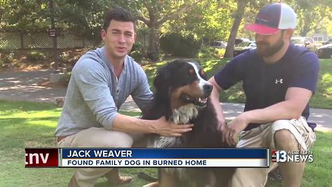 Family dog survives California wildfire