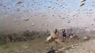 Millions Of Swarming Locusts Attack Fisherman In Russia - Video