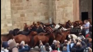 Wild horses herded through town in northern Spain festival - Video