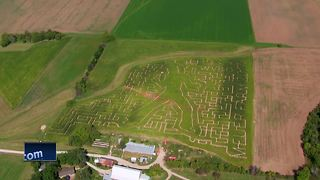 Wisconsin corn maze honors music legend with impressive design - Video